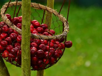 photo of cherries, one of many summer Fruits and Vegetables for a Plant-Based Diet